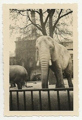 21/844 Foto Zoo Berlin 16.05.1942 Elefant