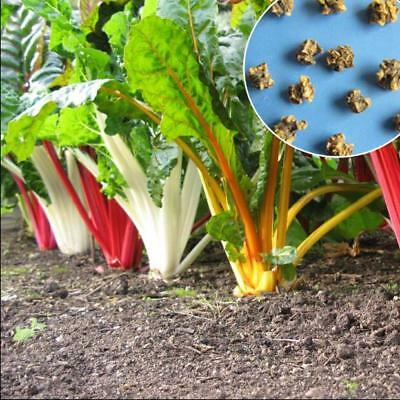 20 pcs Swiss Chard 'mixed Colour Leaf Beet, Spinach Beet vegetable seeds