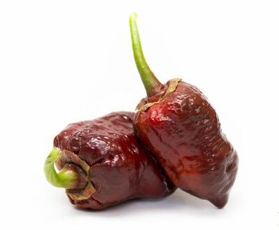 Hot Chili Pepper - 7 POT BUBBLEGUM CHOCOLATE - 10 Vegetable Seeds-From 2017
