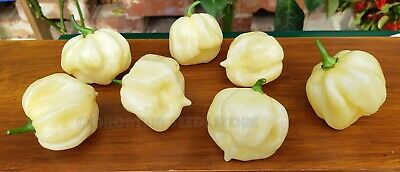 Hot Chili Pepper-TRINIDAD 7 POT WHITE -10 Vegetable Seeds-High Quality-From 2017