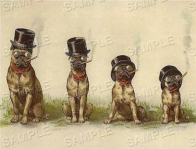 "CIGAR SMOKING PUGS! VINTAGE ANTIQUE VICTORIAN *CANVAS* DOG ART PRINT - 19"" x 13"""
