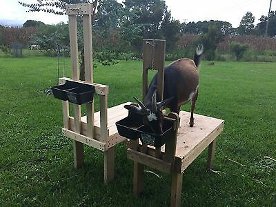 Goat Sheep Dog Grooming Milking Fitting Stand Stanchion w/choice of feeder
