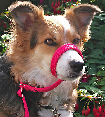 Figure of 8 eight dog head collar only No Lead Please measure your dog.