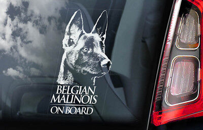 Belgian Malinois on Board - Car Window Sticker - Mechelse Dog Sign Decal - V01