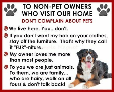 BERNESE MOUNTAIN DOG House Rules for Non Pet Owners Funny Fridge Magnet