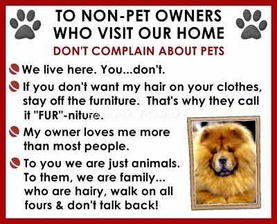 CHOW CHOW House Rules for Non Pet Owners Funny Fridge Magnet