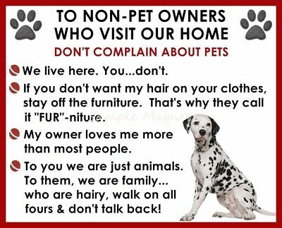 DALMATION House Rules for Non Pet Owners Funny Fridge Magnet