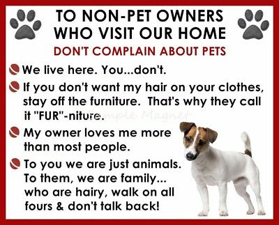 JACK RUSSELL TERRIER House Rules for Non Pet Owners Funny Fridge Magnet