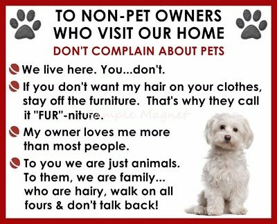 MALTESE House Rules for Non Pet Owners Funny Fridge Magnet