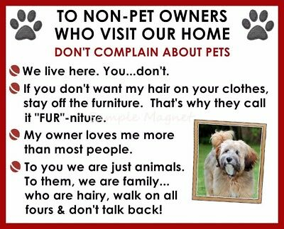 TIBETAN TERRIER House Rules for Non Pet Owners Funny Fridge Magnet
