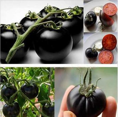 20 pcs vegetable Seeds mini black tomato