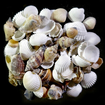 Assorted mixed craft shells for florestry and creative projects 5-15mm | 100g