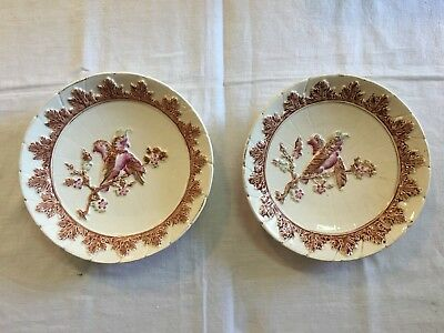 Beautiful Pair Of Antique Majolica Plates With Birds