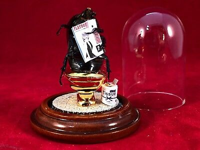 """*Entomology/Taxidermy """"Dung"""" beetle on Toilet w/Playboy magazine! Diorama-insect"""