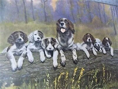 Vintage Lithograph of Springer Spaniel Dog & Puppies The Gangs All Here Ingerle