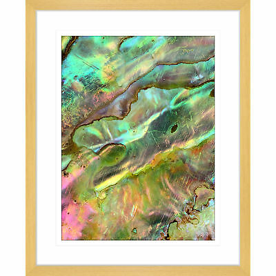 NEW Pacific Paua I Framed Print Innovate Interiors Wall Art