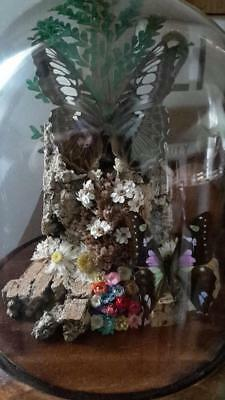 Taxidermy Butterflies in glass domed case