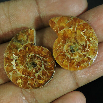 41.10Cts. CHRISTMAS OFFER FOSSIL  AMMONITE PAIR FANCY CABOCHON TOP GEMSTONES