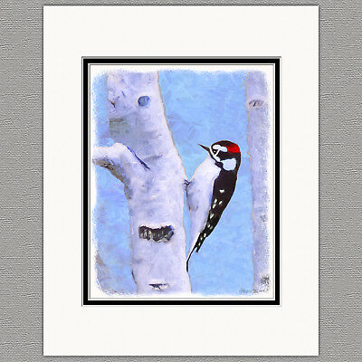 Downy Woodpecker Wild Bird Original Art Print 8x10 Matted to 11x14