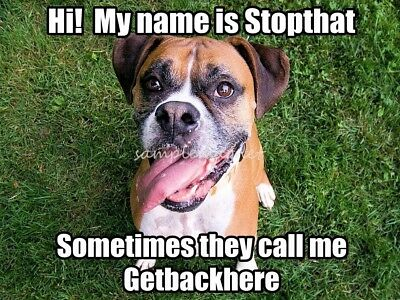"BOXER My Name is Stop That 4"" x 3""  Fridge Magnet"