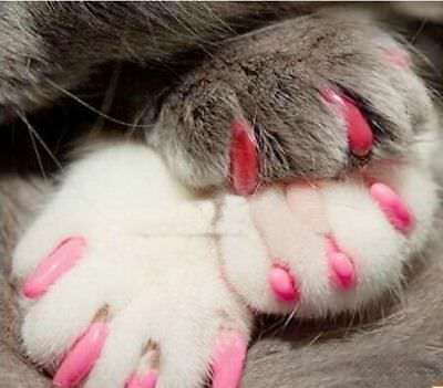 20pcs Soft Cat Paws Grooming Nail Claw Cap + Adhesive Glue and Applicator