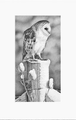 Winter Barn Owl- Limited Edition Print by Clive Meredith