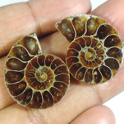 BEST OFFER 44.75Cts. NATURAL FOSSIL  AMMONITE PAIR FANCY CABOCHON TOP GEMSTONES