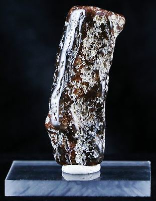 ** Fossilized Petrified Polished Wood Branch From Utah 66-150 Million Yrs Ago **