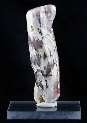 Fossilized Petrified Polished Wood Branch From Utah 66-150 Million Yrs Ago