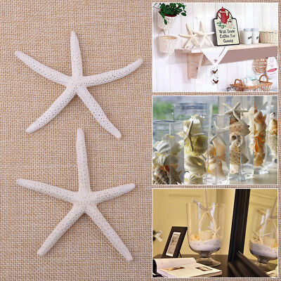 12pcs 5-10cm Sea Star Natural White Pencil Finger Starfish Wedding Decor Craft
