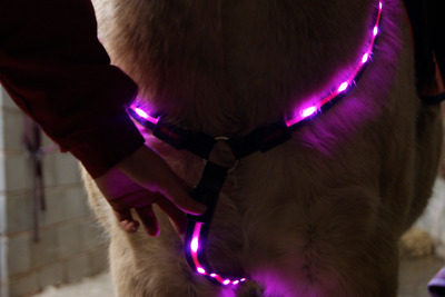 LED (Flashing) Horse Breastplate in Green/Pink or Red (Size: Large)
