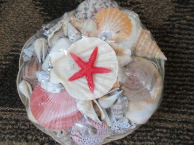 LARGE BASKET OF ASSORTED SEA SHELLS (approx 800gram) Craft, display,Bathroom