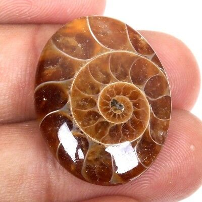 Natural AMMONITE FOSSIL 26x20 mm Oval Cabochon For Ring Gemstone 25 Cts S-38096