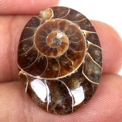 Natural Lovely AMMONITE FOSSIL 25x19 mm Oval Cabochon Gemstone 20 Cts S-38100