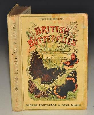Coleman: British Butterflies Figures Descriptions of Every Native Species 1895