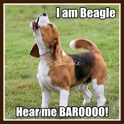 BEAGLE Howling Funny Magnet 3.25 x 3.25 inches