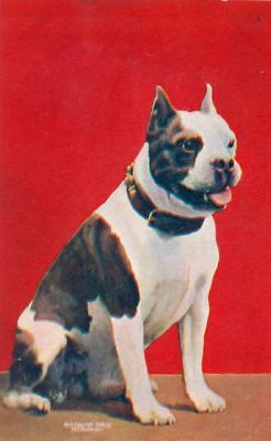 Vintage Postcard PC Sitting Pit Bull Dog Sheahan 1906 USA Made Excellent!