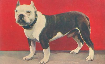 Vintage Postcard PC Standing Pit Bull Dog Sheahan 1906 USA Made Excellent!