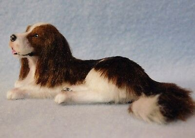 Original Silk Furred English Springer Spaniel Dog, EBSQ, Cammi's