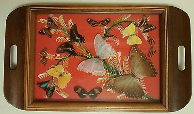 VINTAGE REAL BUTTERFLY SERVING TRAY IN WOODEN MARQUETRY SURROUND ~ 47cm x 28cm