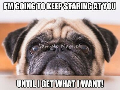 "PUG I'm Going to Keep Staring Funny Fridge Magnet 4"" x 3"""
