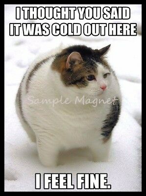 "FAT CAT I Feel Fine Funny Fridge Magnet 4"" x 3"""