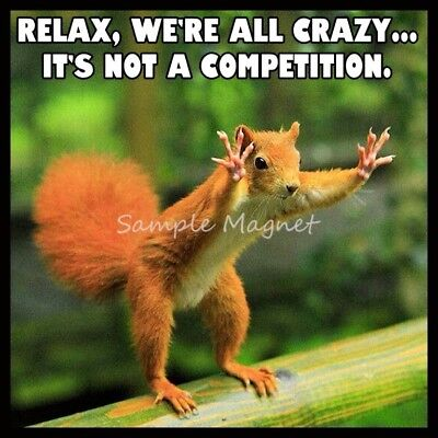 """SQUIRREL Relax We're All Crazy Funny Fridge Magnet 3.75"""" x 3.75"""""""