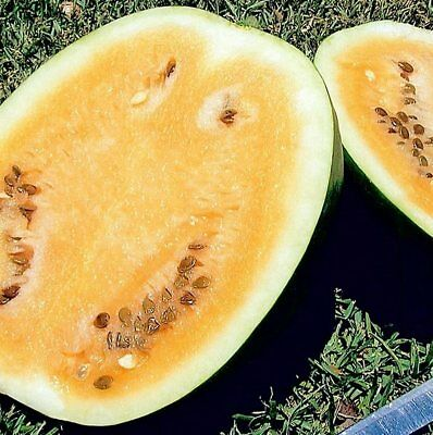 CHAMPAGNE WATERMELON  -  15 seeds (HERITAGE)