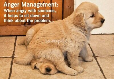 Funny GOLDEN RETRIEVER Puppies Anger Management Refrigerator Magnet 3 x 4.25
