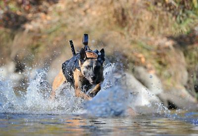 NAVY SEAL TEAM 6 & Cairo Belgian Malinois Training Fearless Glossy