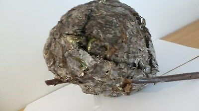 "Original Fresh Picked Real Hornet Nest Paper Wasp nest Beehive 11"" x 10"""