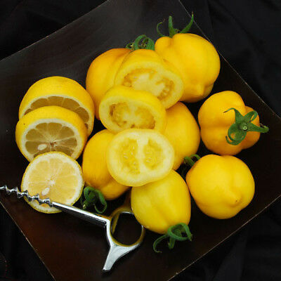 Tomato Seeds - LEMON TREE - 20 Heirloom Vegetable Seeds