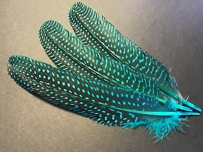 3 Aqua Blue Dyed Spotted Guinea Fowl Feathers 15-20cm DIY Craft Millinery Decor