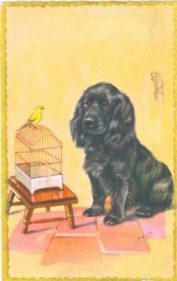 Vintage Postcard PC Signed Black Cocker or Field Spaniel & Canary 1958 Belgium